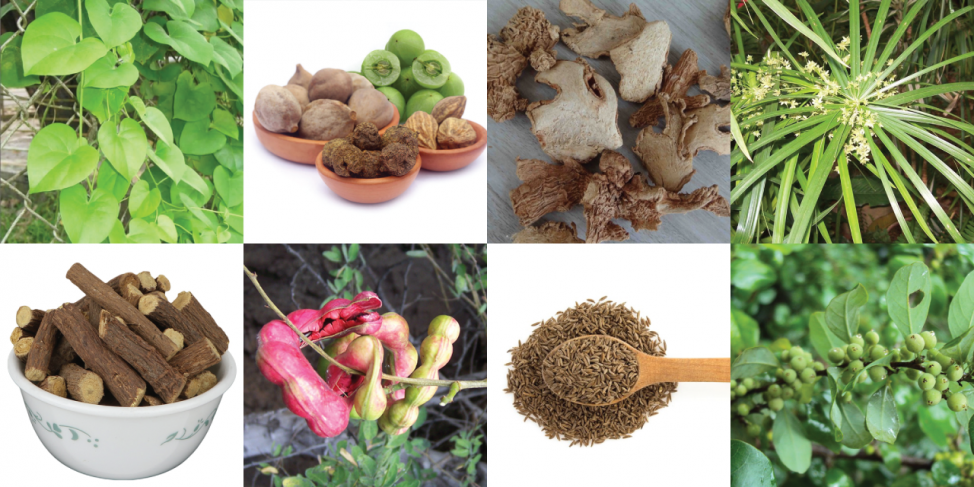 Fat Cutter Ayurvedic Ingredients